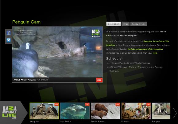 animal_planet_live_tv